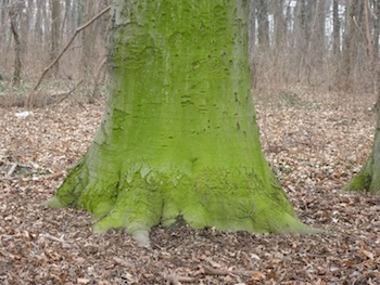 gruenbaum