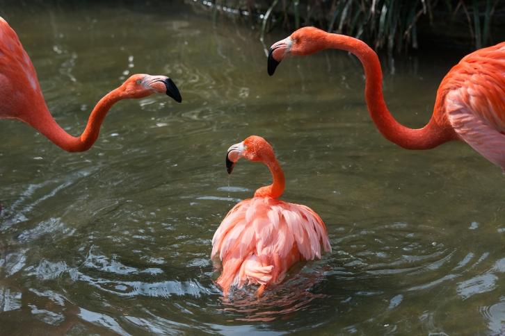 flamingo-23 Kopie